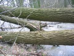 Hochwasser nach Sturmtief Kyrill 2007