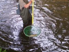 Bilder vom Fischsterben 2005
